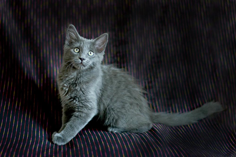 kitties-4edit.jpg