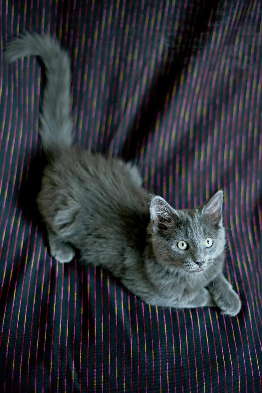 kitties-5.jpg