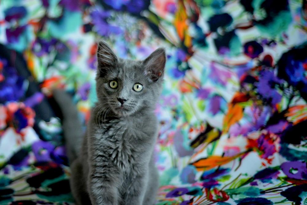 kitties-7.jpg