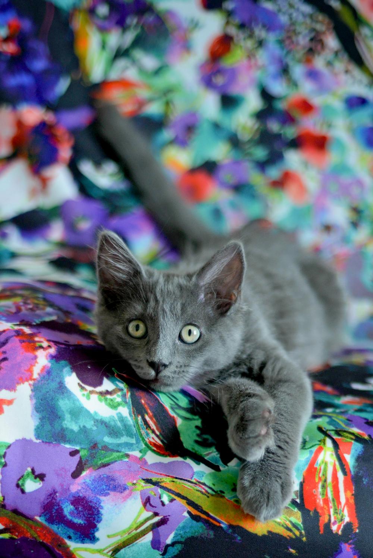 kitties-8.jpg