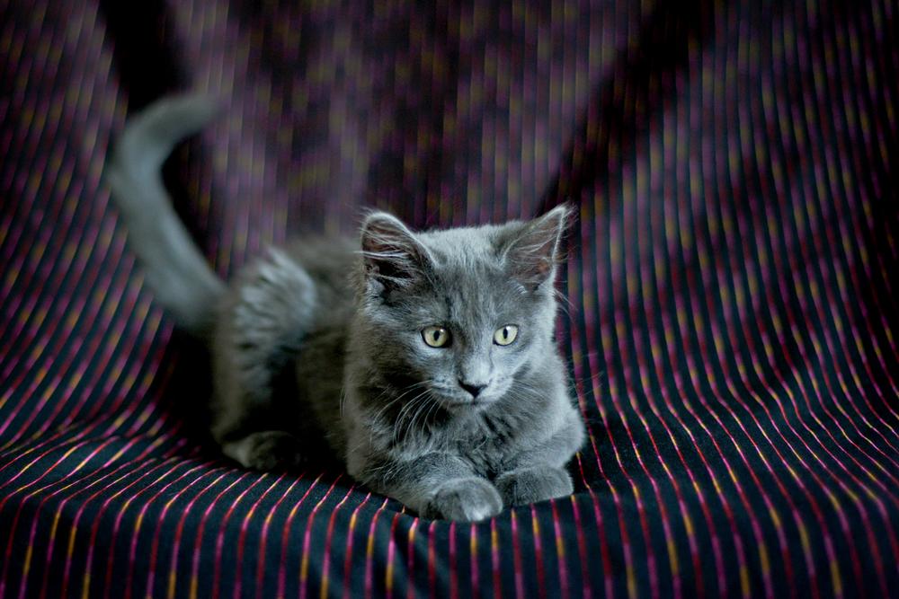 kitties-6.jpg