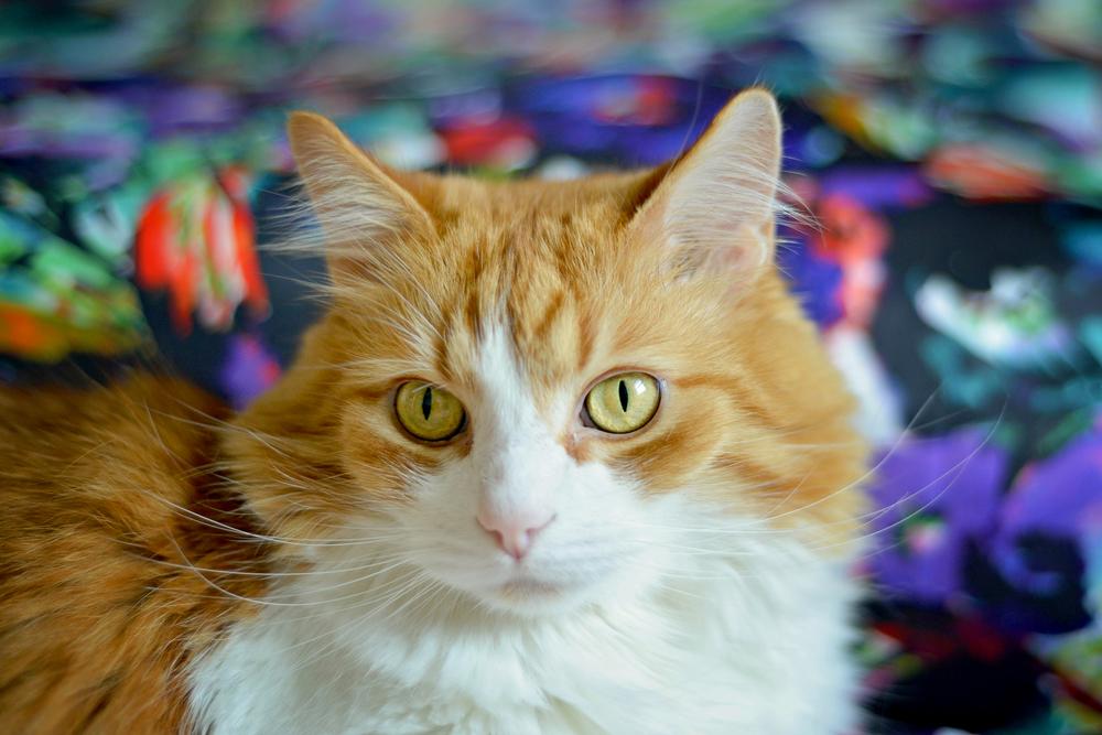 kitties-11.jpg