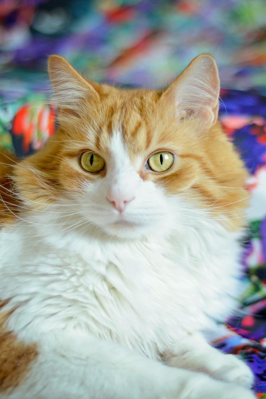 kitties-12.jpg