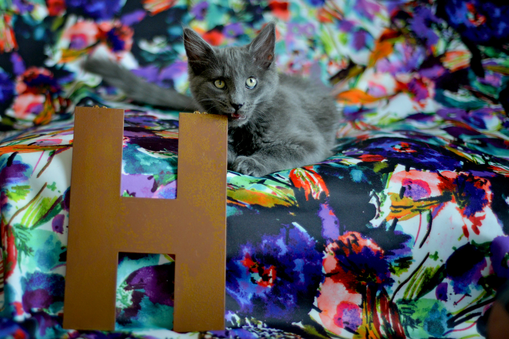 kitties-13.jpg