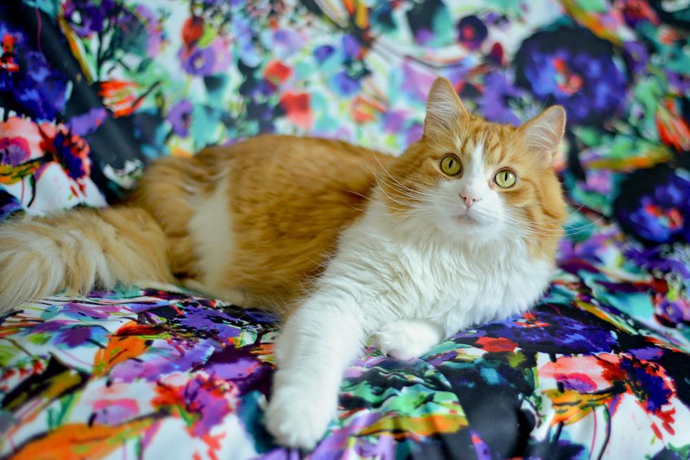 kitties-16.jpg