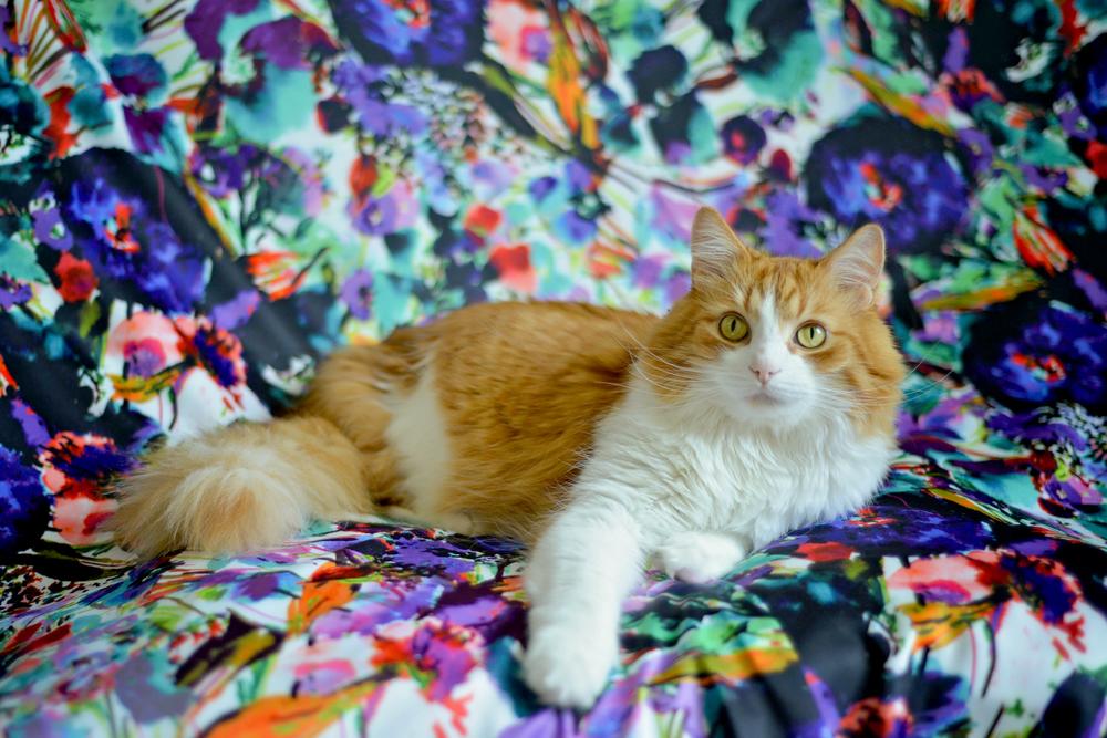 kitties-17.jpg