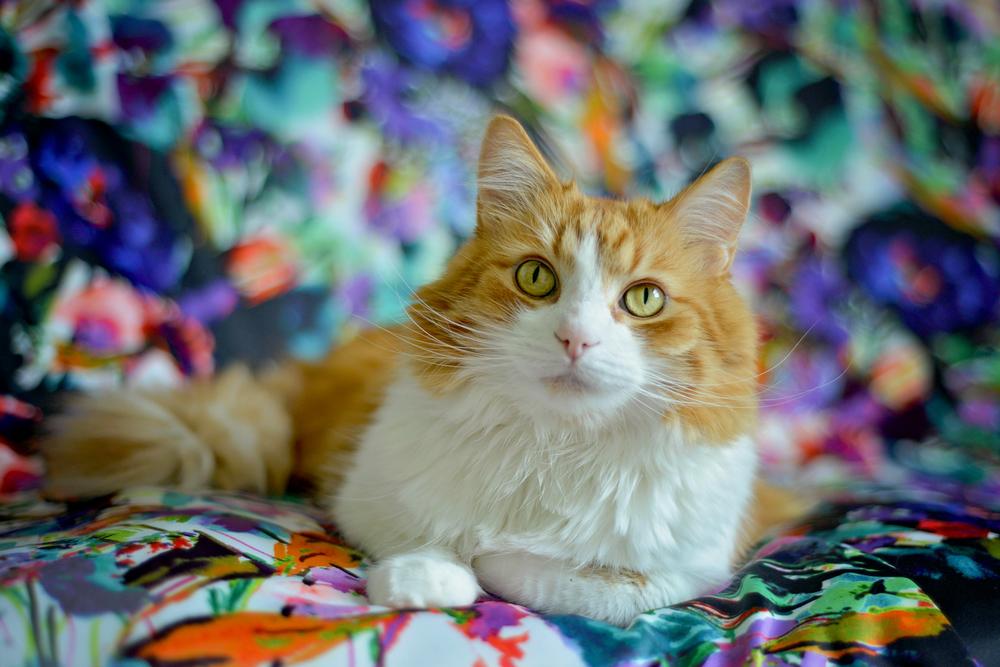 kitties-19.jpg