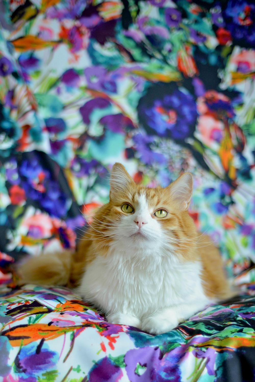 kitties-22.jpg