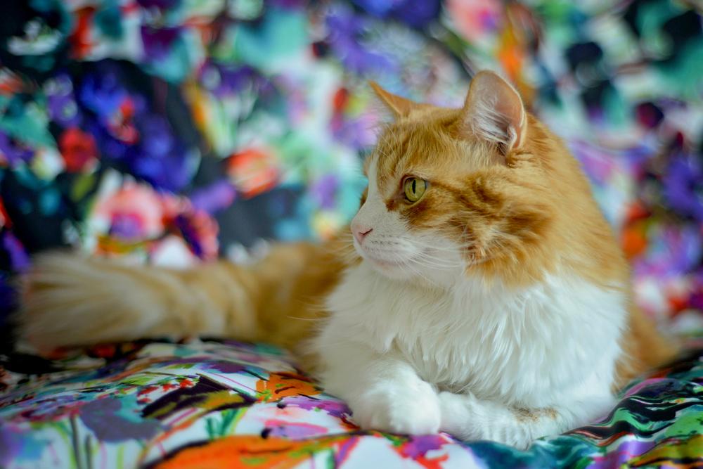 kitties-21.jpg
