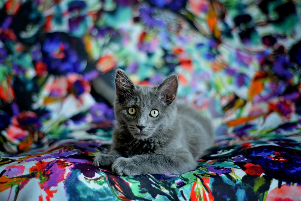 kitties-9.jpg