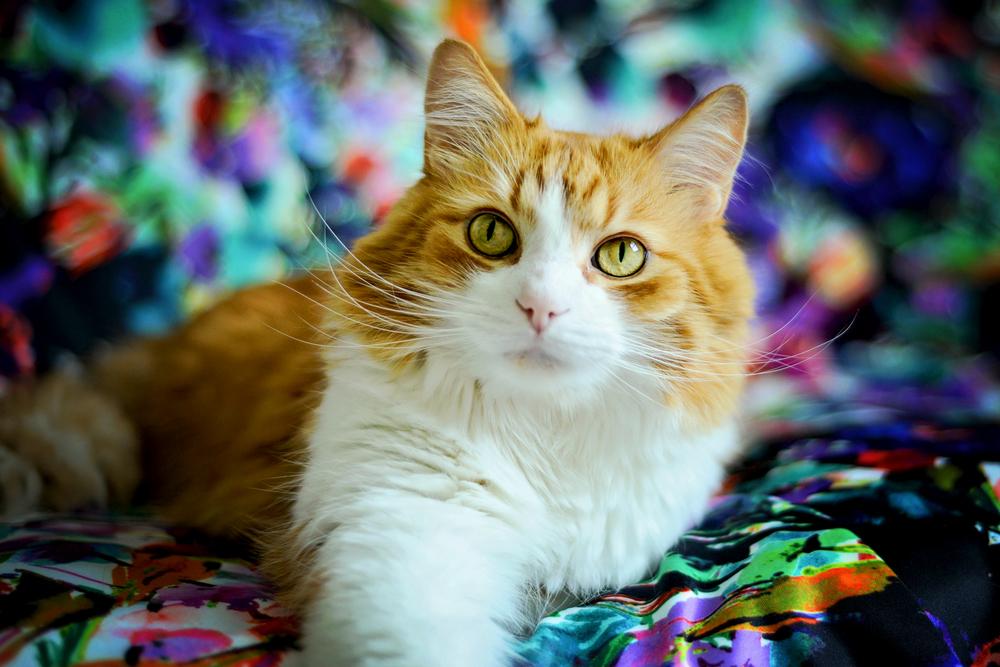 kitties-20-2.jpg