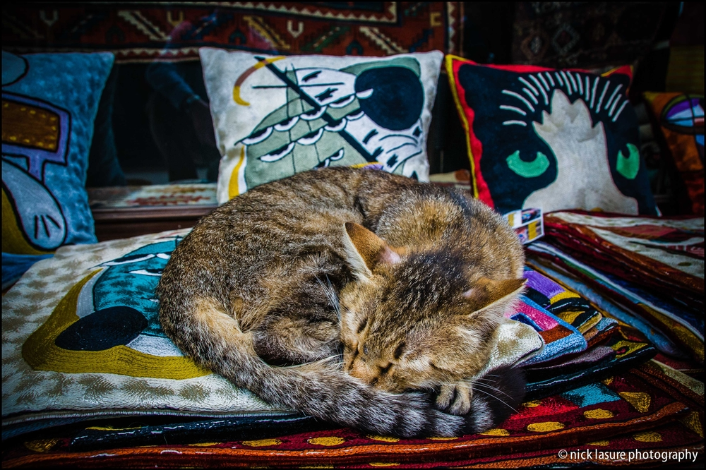 Nap time in the back alleys of Istanbul, Turkey // Nikon D300