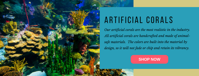 Online Coral Shop.png