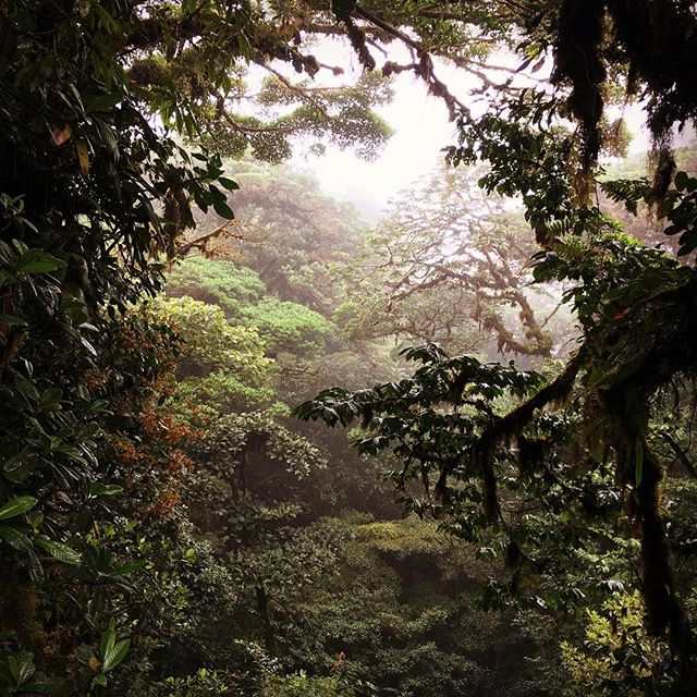 Monteverde Cloud Forest #hitchyourwagontoadragon #costaricahoneymoon