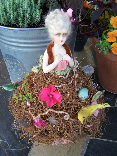 Lady Bowerbird