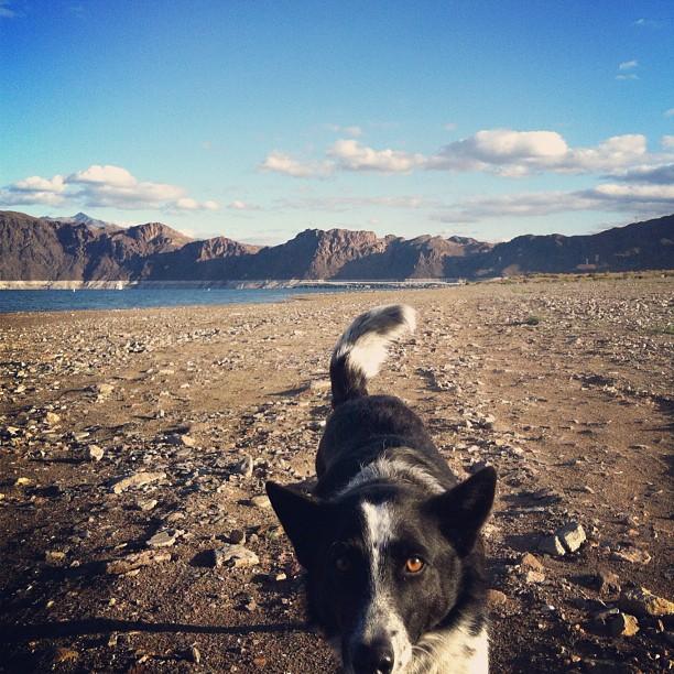 Dogs off leash at boulder beach @kellylaverna