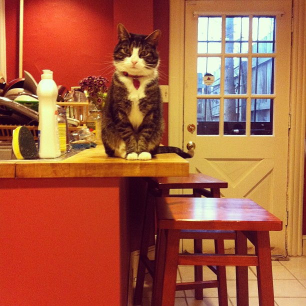 Hello from the kitchen counter @sadbumblebee #catsofinstagram