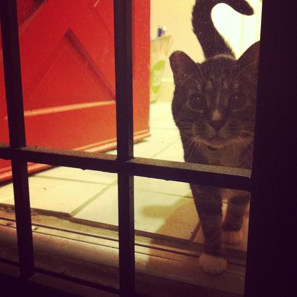 Hurro! #catsofinstagram #meowmeow
