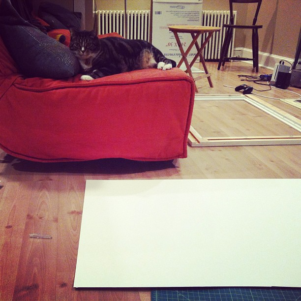 Framing prints with the cat. I hang in three days!
