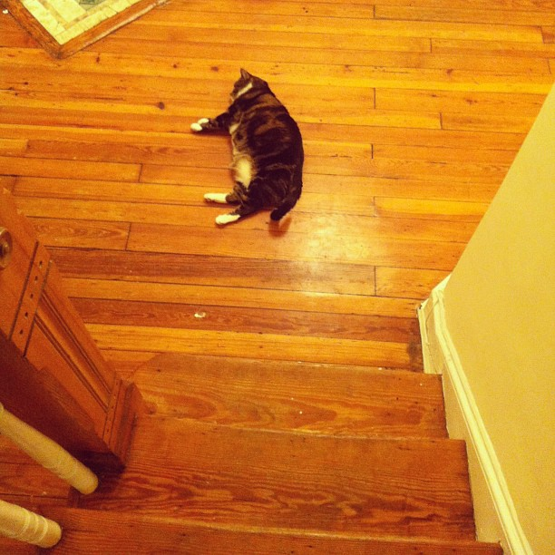 Found the cat passed out in the foyer. #catsofinstagram