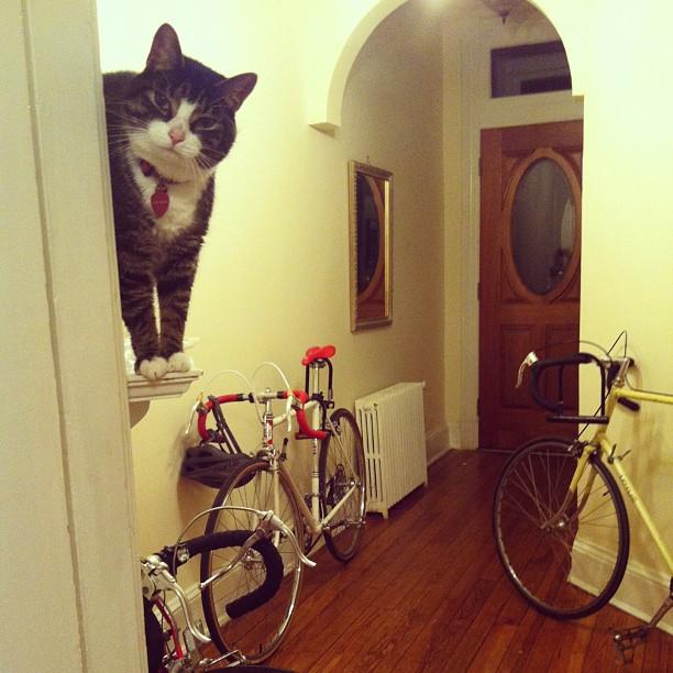 Hello? #catsofinstagram