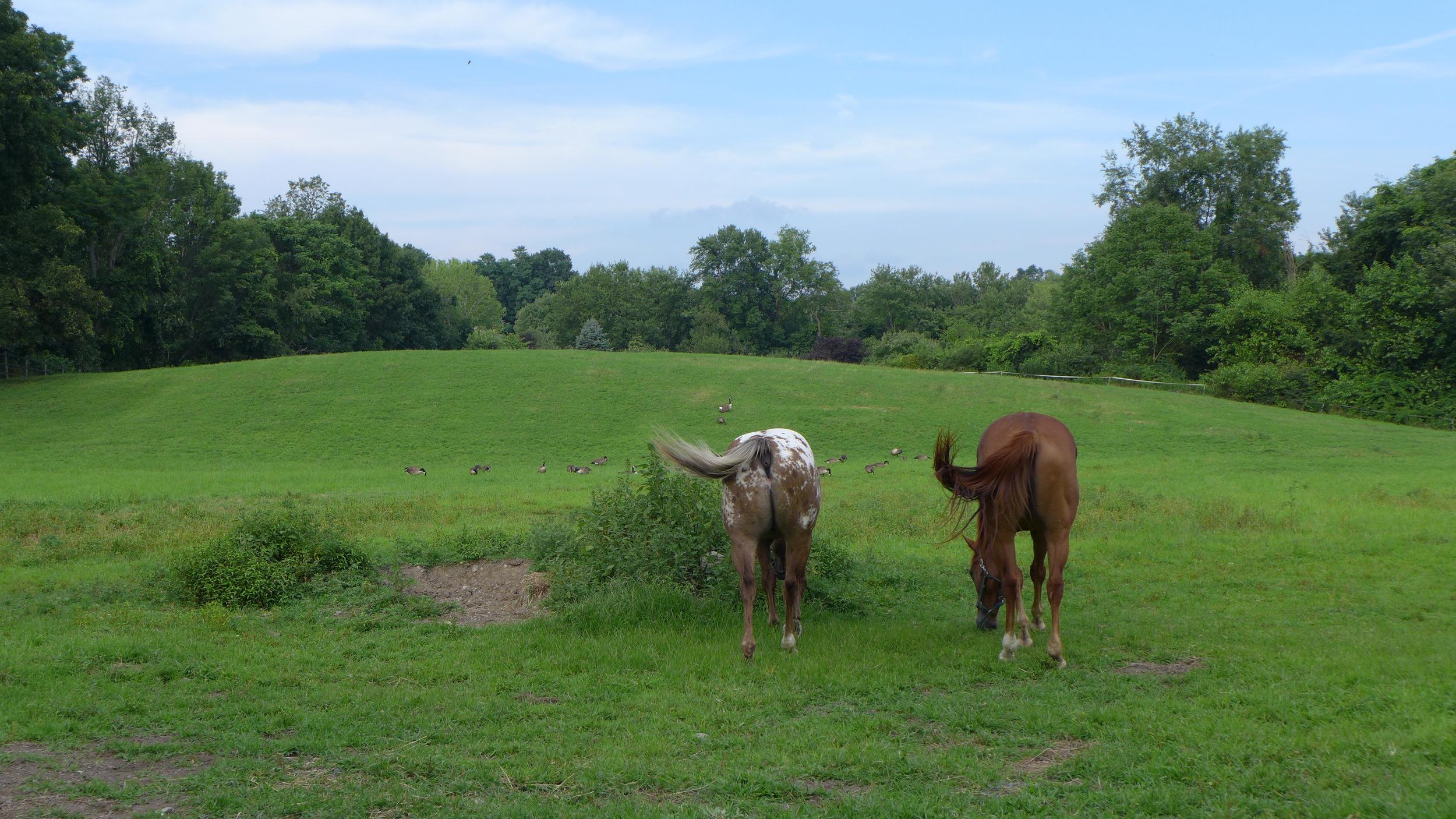 Horse Leasing New York Horseback Riding Misfit Farm