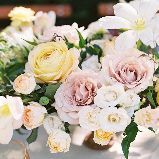 """""""Rose is a rose is a rose is a rose Loveliness extreme."""" - Gertrude Stein"""