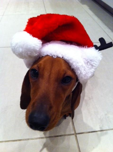 Hudson reindeer hat 2012.JPG
