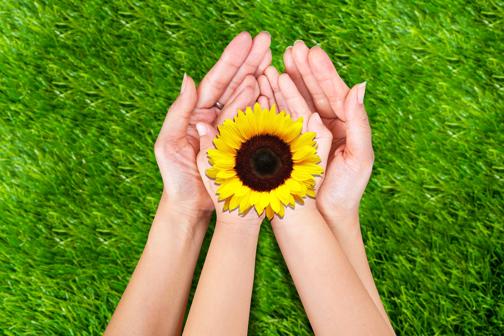bigstock-Flower-In-Hands-43262125.jpg