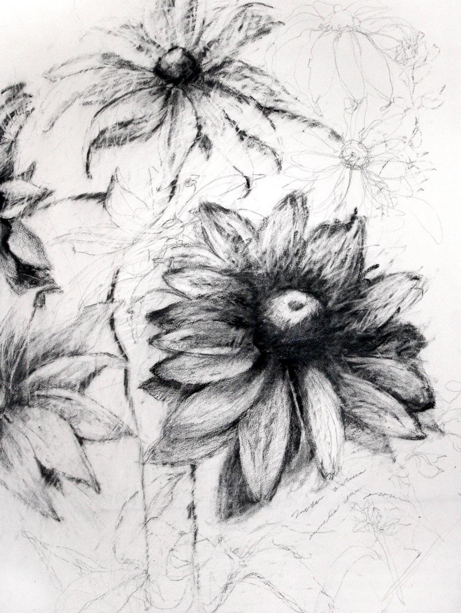 2_cone-flower.jpg