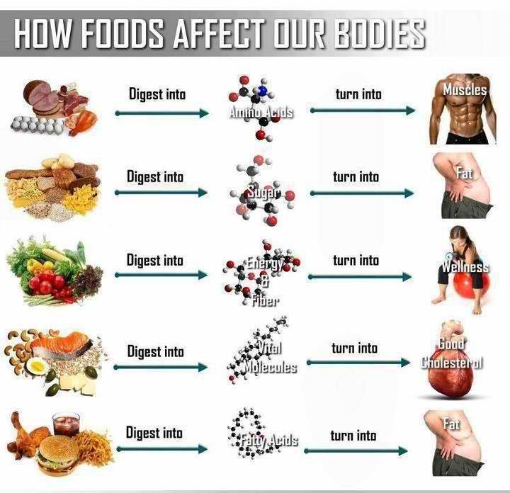 I'm not sure of the original source of this chart, but this gives a great breakdown of what happens to what you're putting into your body... choose wisely!