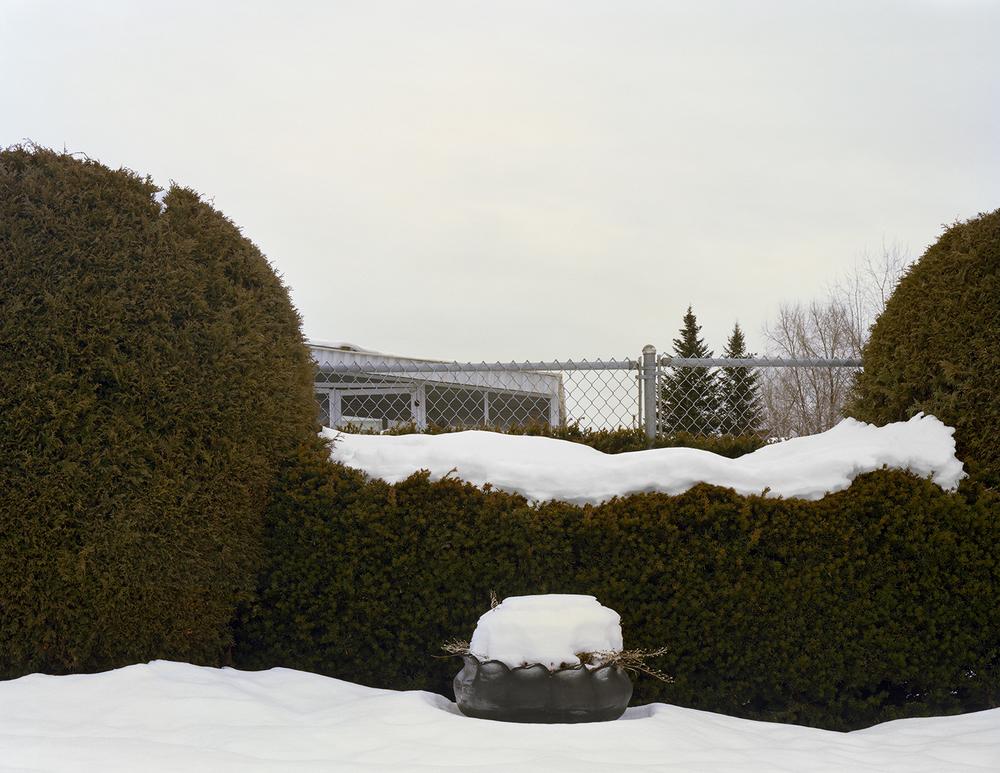 snowbushesBook.jpg