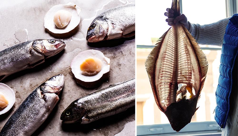 Katie-B-Foster-Fish-Seafood.jpg