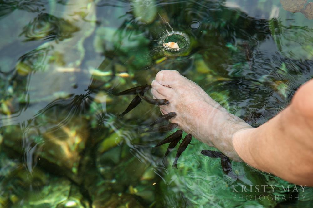 Dzibilchaltun cenote fish