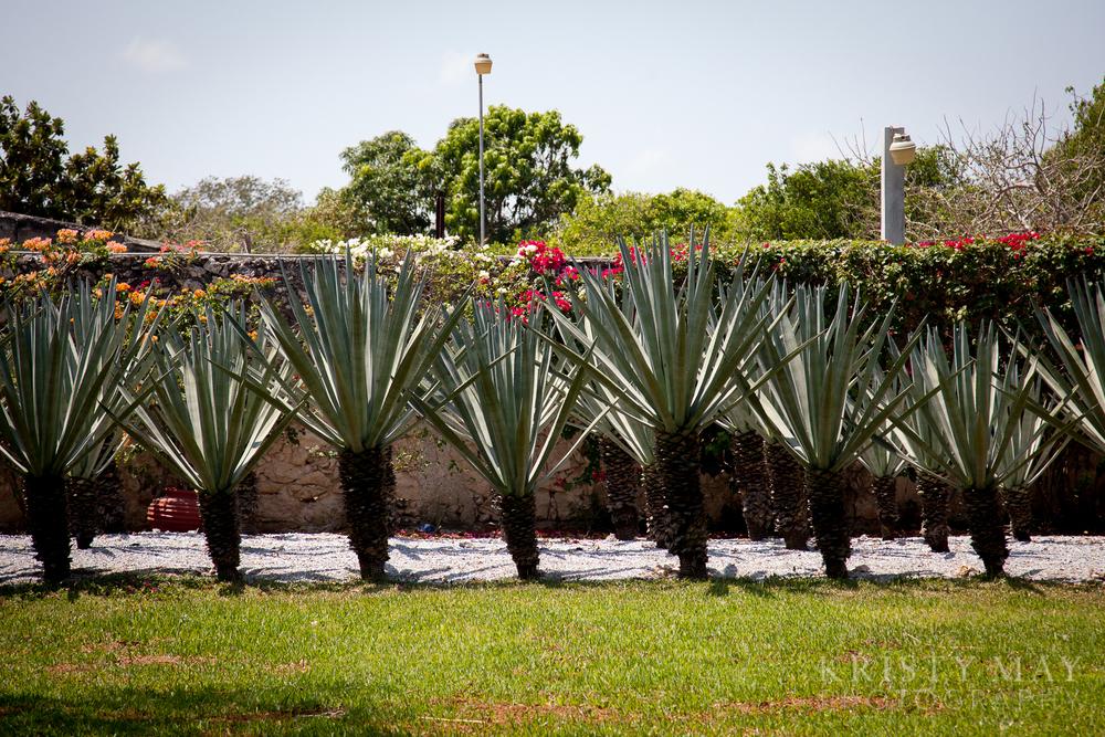 Rancho Tierra Bonita, near Progresso, Mexico