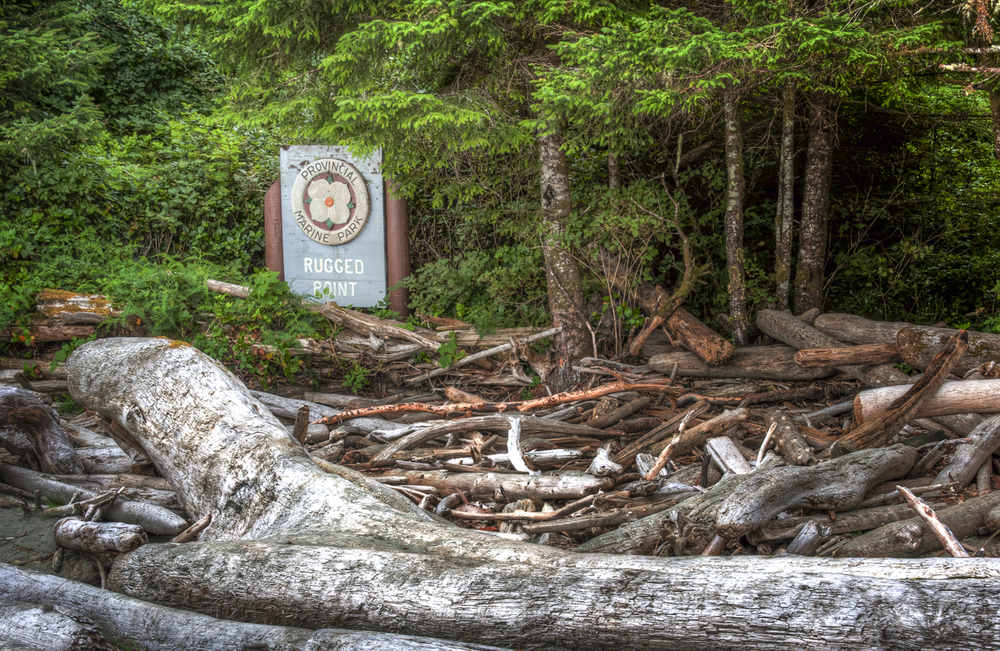Lots of driftwood at the start of the trail to Rugged Point