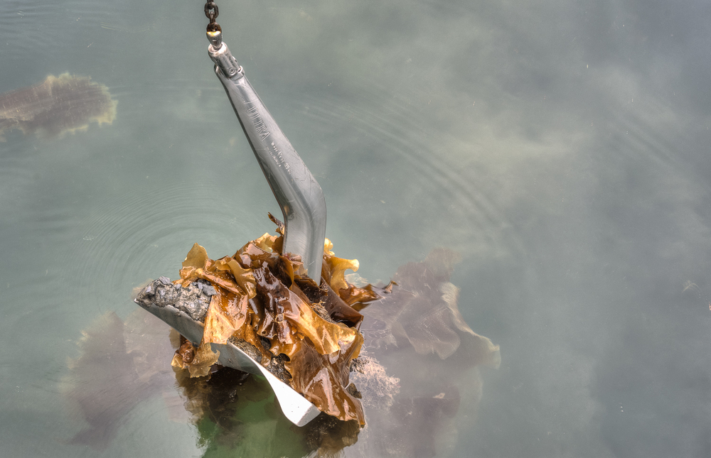 The Ultra anchor always does a good job even on a kelp bottom
