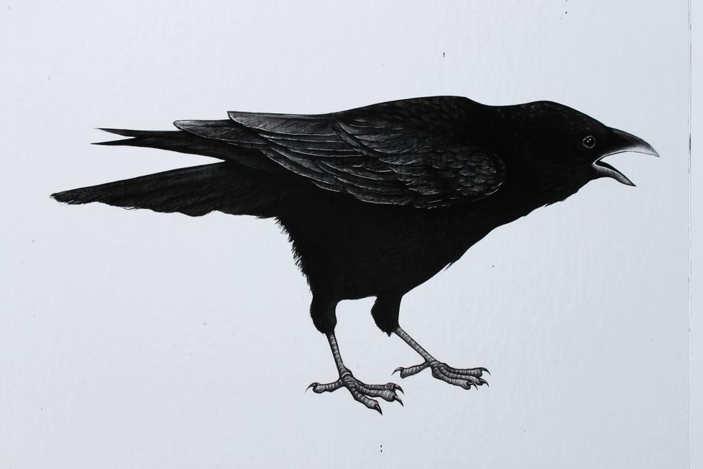 Indre McCraw crow.JPG
