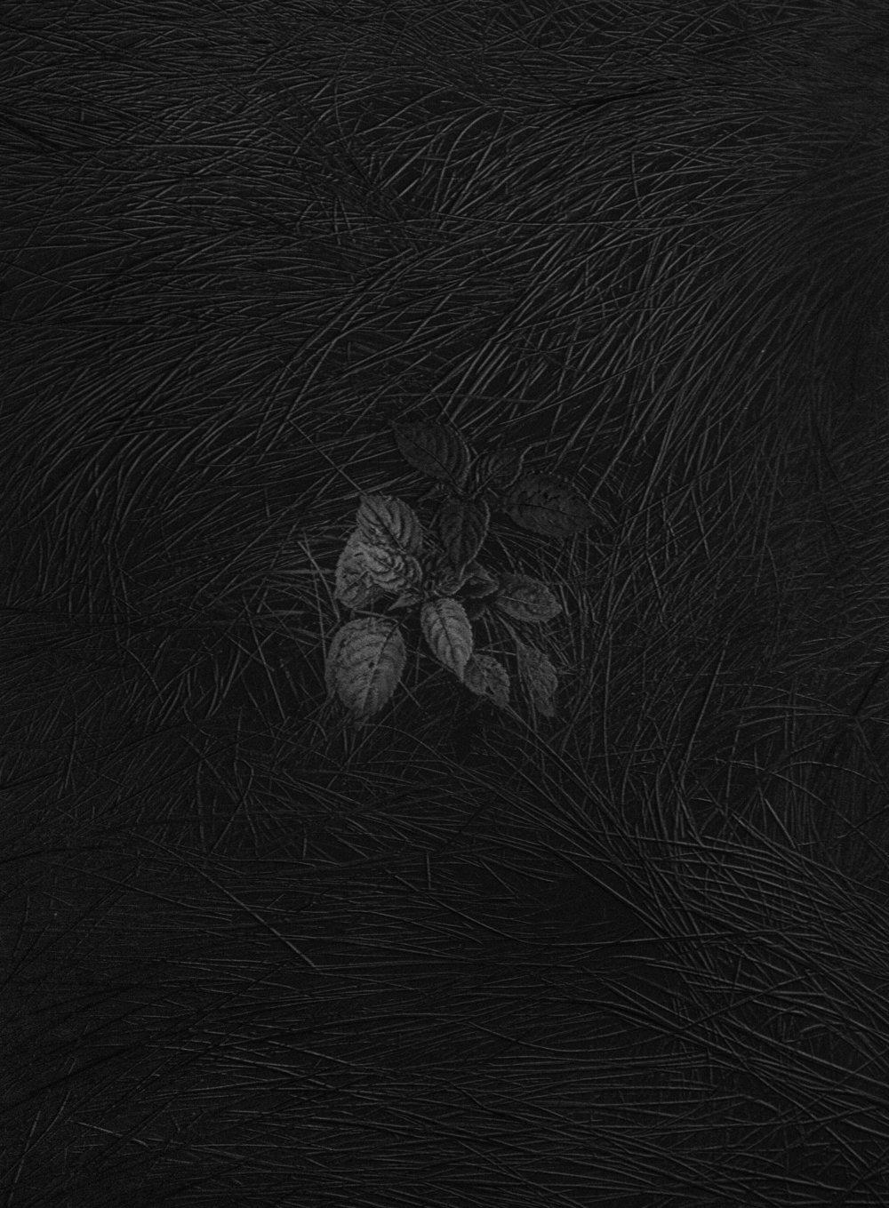 Mitsu Yoshikawa,  A Plant in Grass