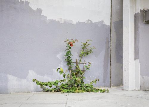 J. John Priola,  Grey Wall , 2014