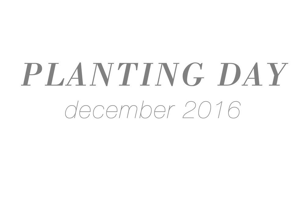 plantingday.jpg