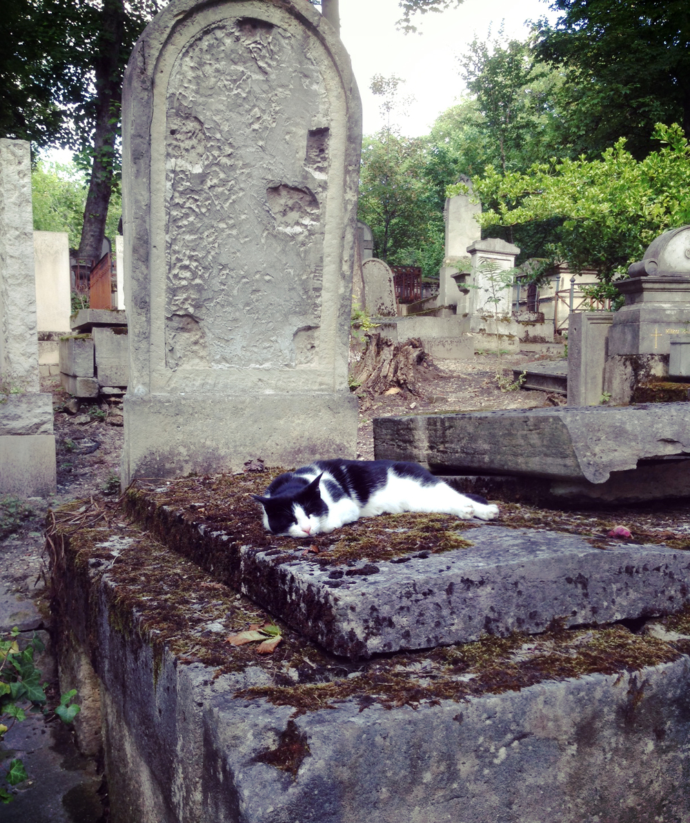 So while exploring the Pere Lachaise Cemetery in Paris I came across this unmarked grave with a very sleepy cat claiming it.  This amused me more than anything I saw that day so I wanted to share and HAPPY HALLOWEEN btw!