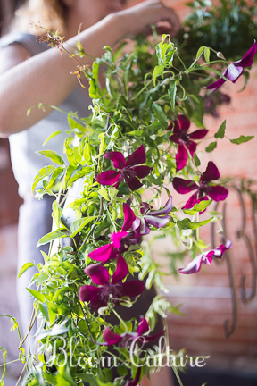 bloom_culture_002.jpg