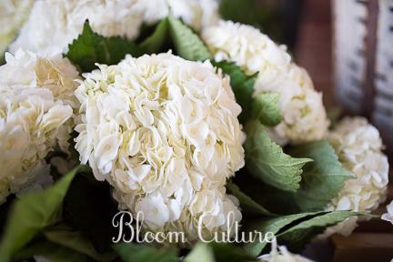 bloom_culture_015.jpg