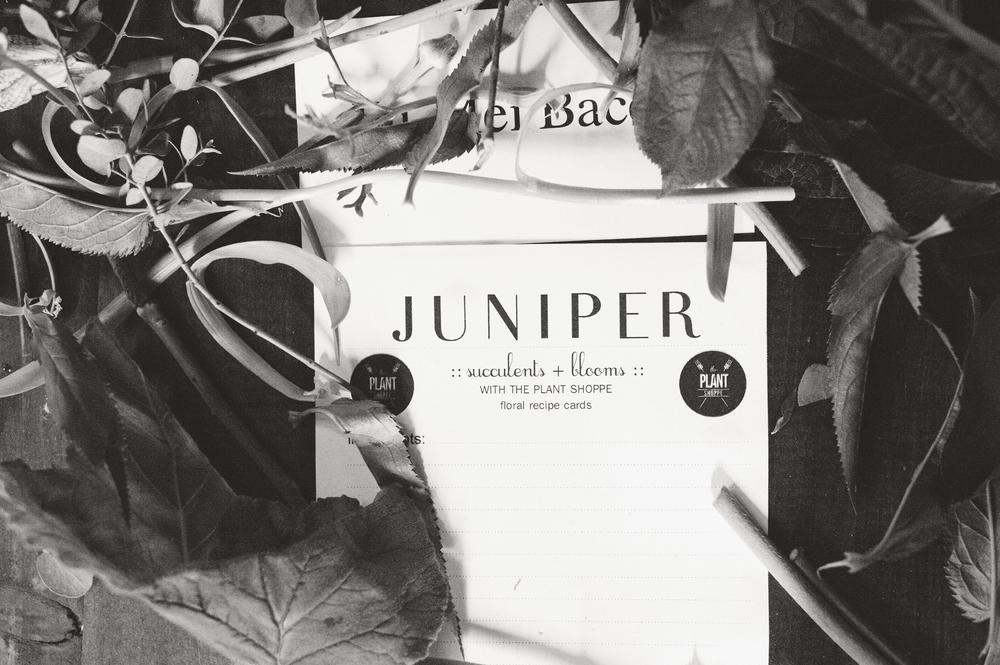 Juniper-Design0087.jpg