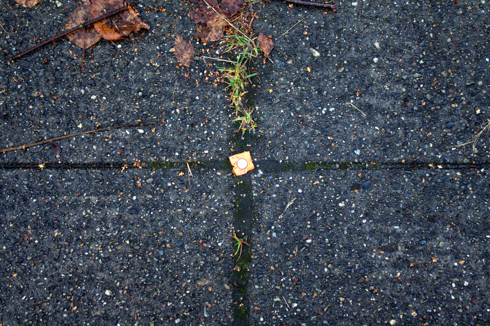 A surveying control point set into the sidewalk in Seattle, WA. Photo by Christine Bryant Cohen, 2013.