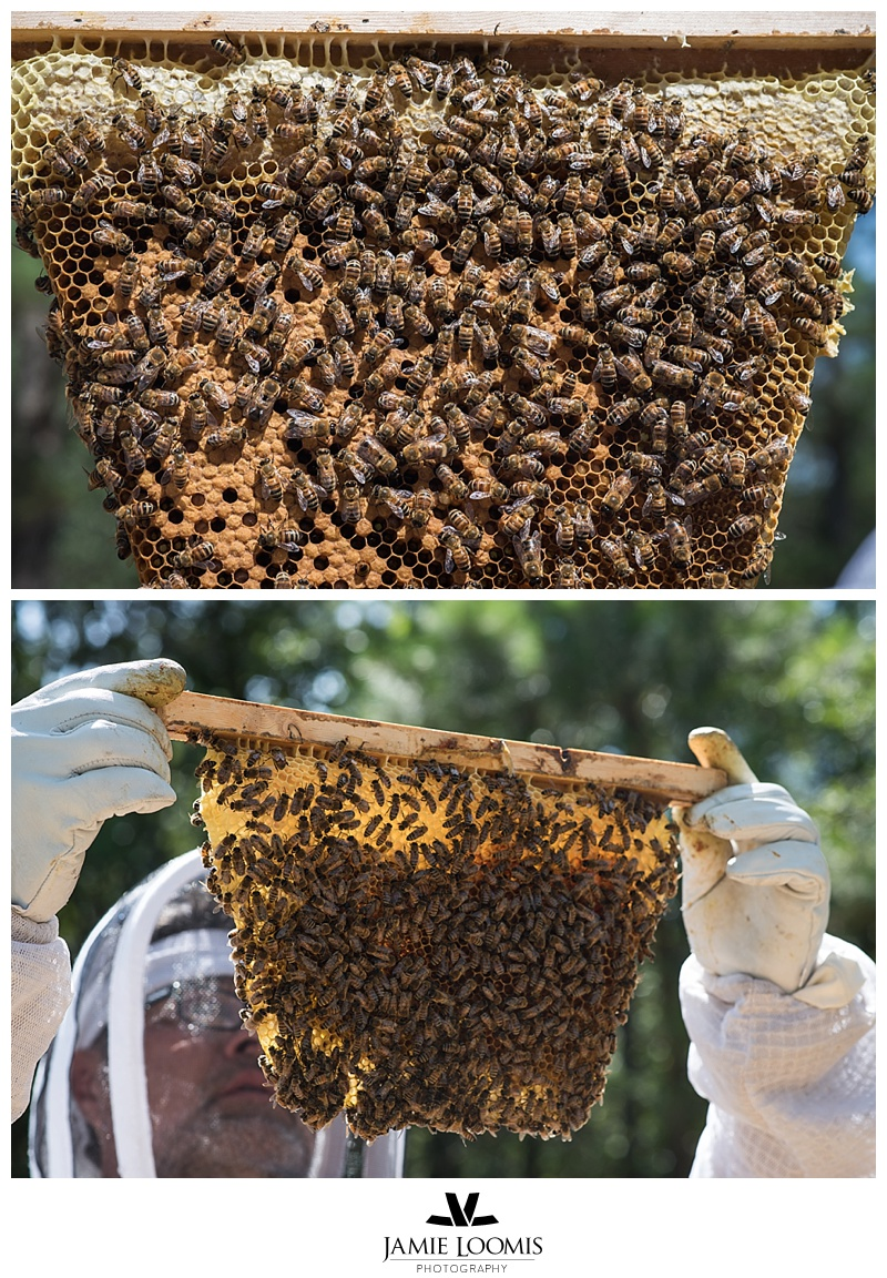 Frames from our TopBar hive.