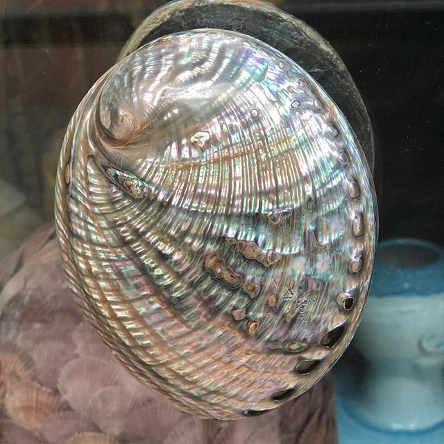 This Abalone shell is actually a door handle on a glass door into a shop. Quite beautiful....reuse remake recycle