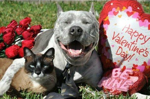Image result for animal valentines