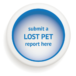 lost-pet-report.png